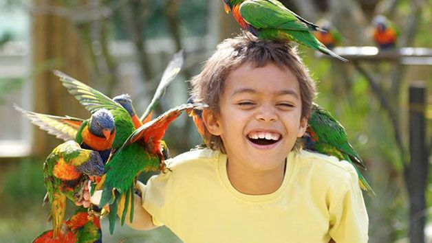 Choice of Animal Encounter at Drusillas Zoo Park for One