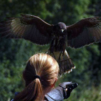 Exclusive Falconry East Sussex