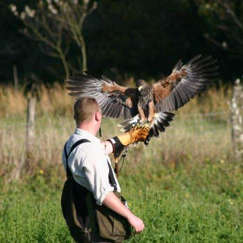 Falconry Training East Sussex