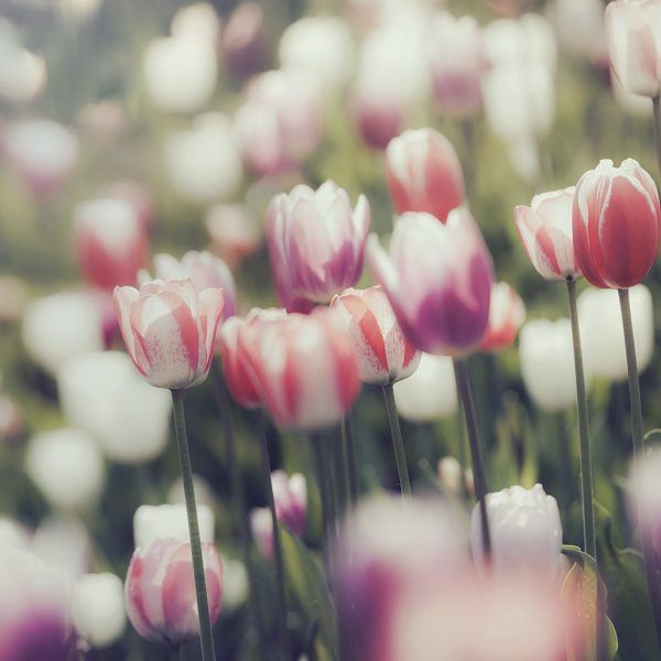 SW083 Floral