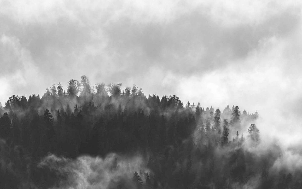 Vista Splashback Hazy Forest
