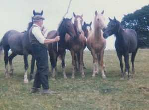 granddad and his horses
