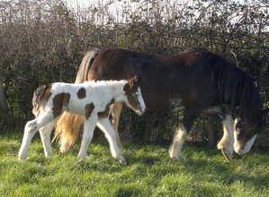 Mias foal