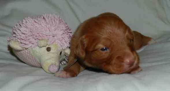 brown boy 14 days
