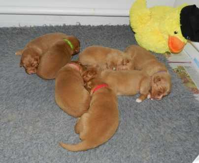 Puppy pile day 14