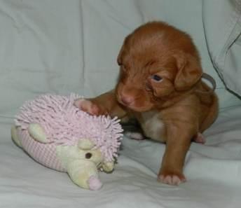 brown boy 3 - 3 weeks b