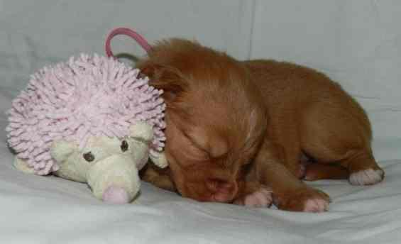 pink girl 4 - 3 weeks d