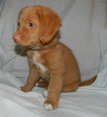 brown boy 8 weeks