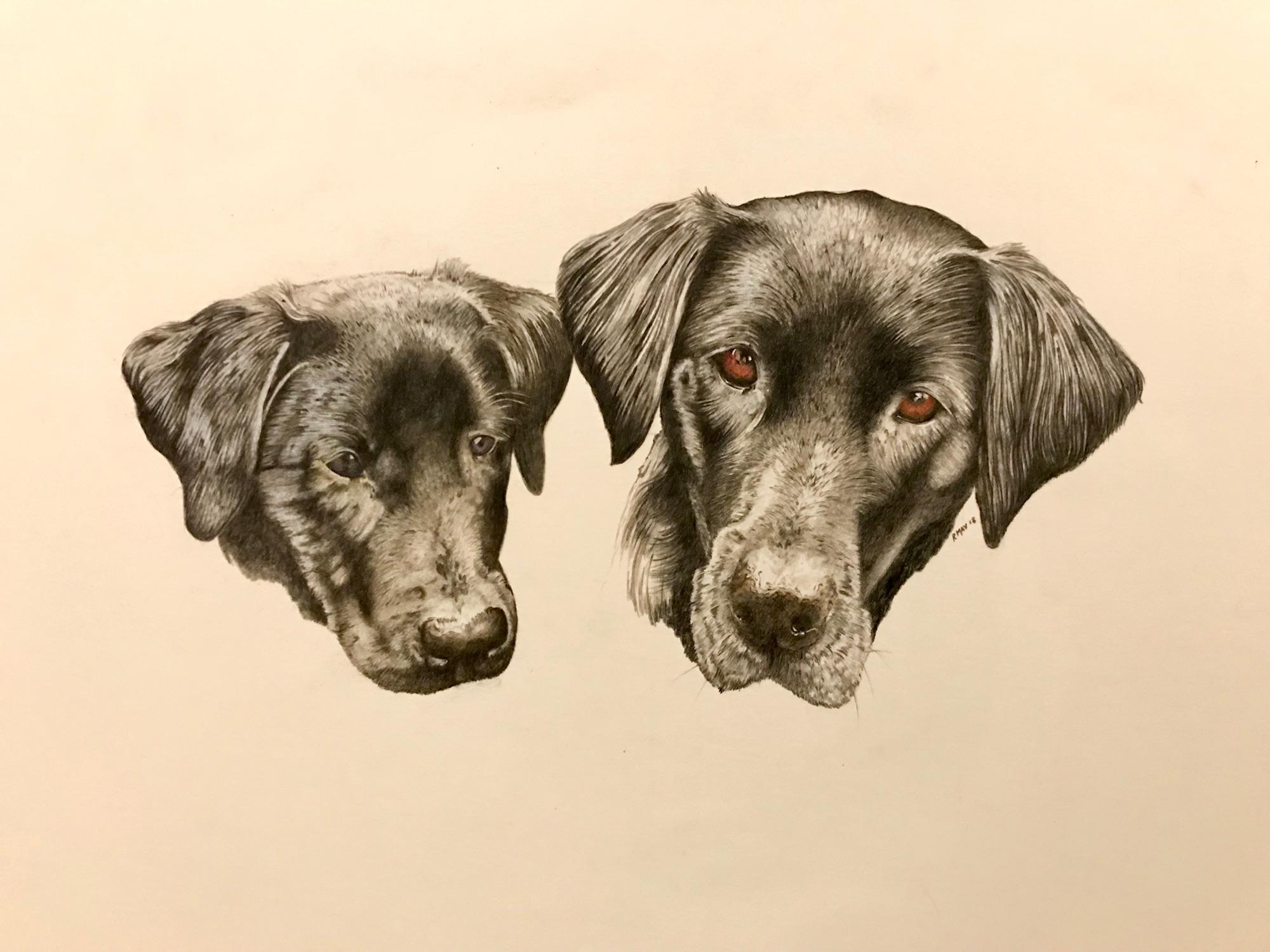 Canine dog pencil portraits