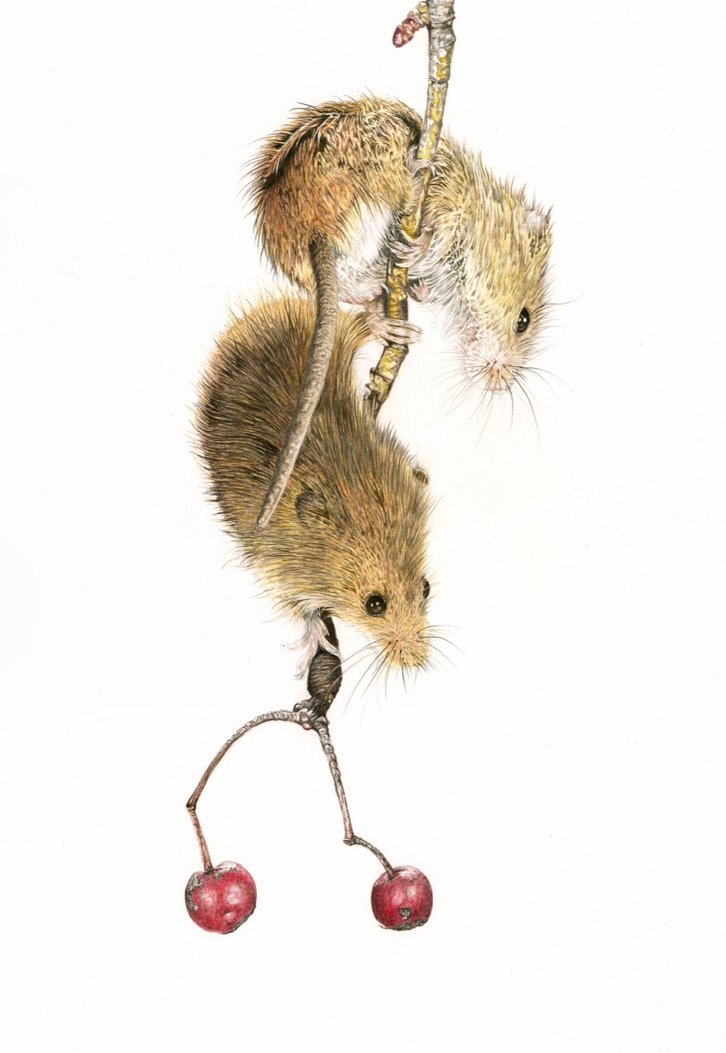 British wildlife art harvest mice