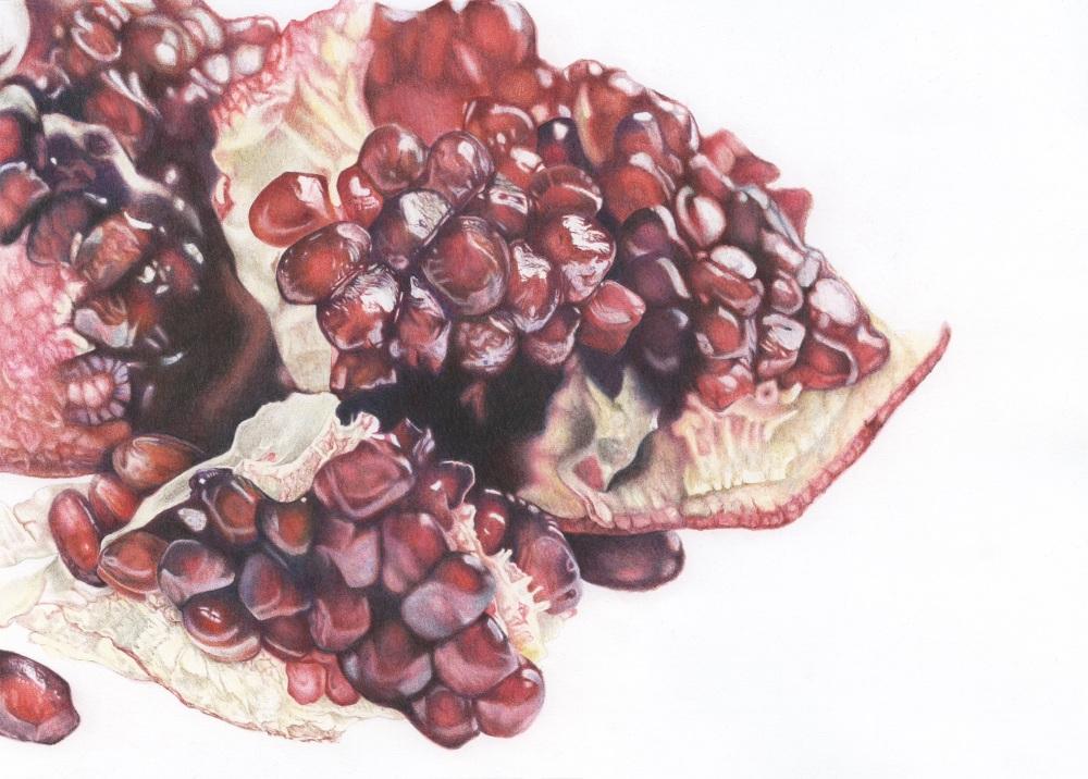 'Pomegranate Study' - Framed