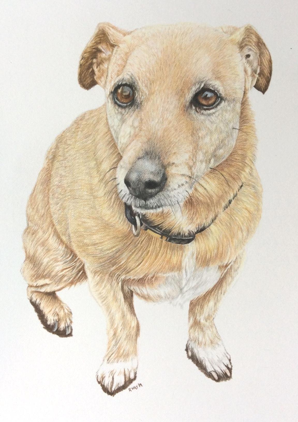 Westie Pet Portrait