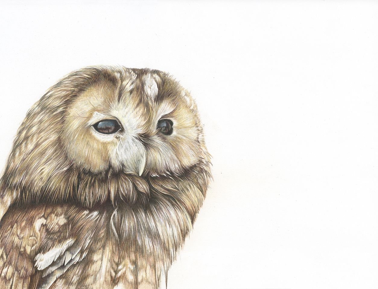 Tawny Owl British Wildlife Art