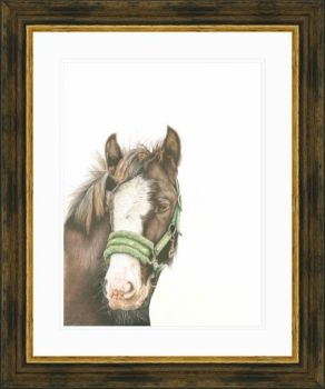 'Whiskers' - Framed