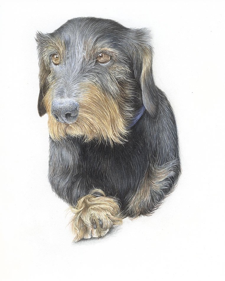 Coloured Pencil Pet Portraits