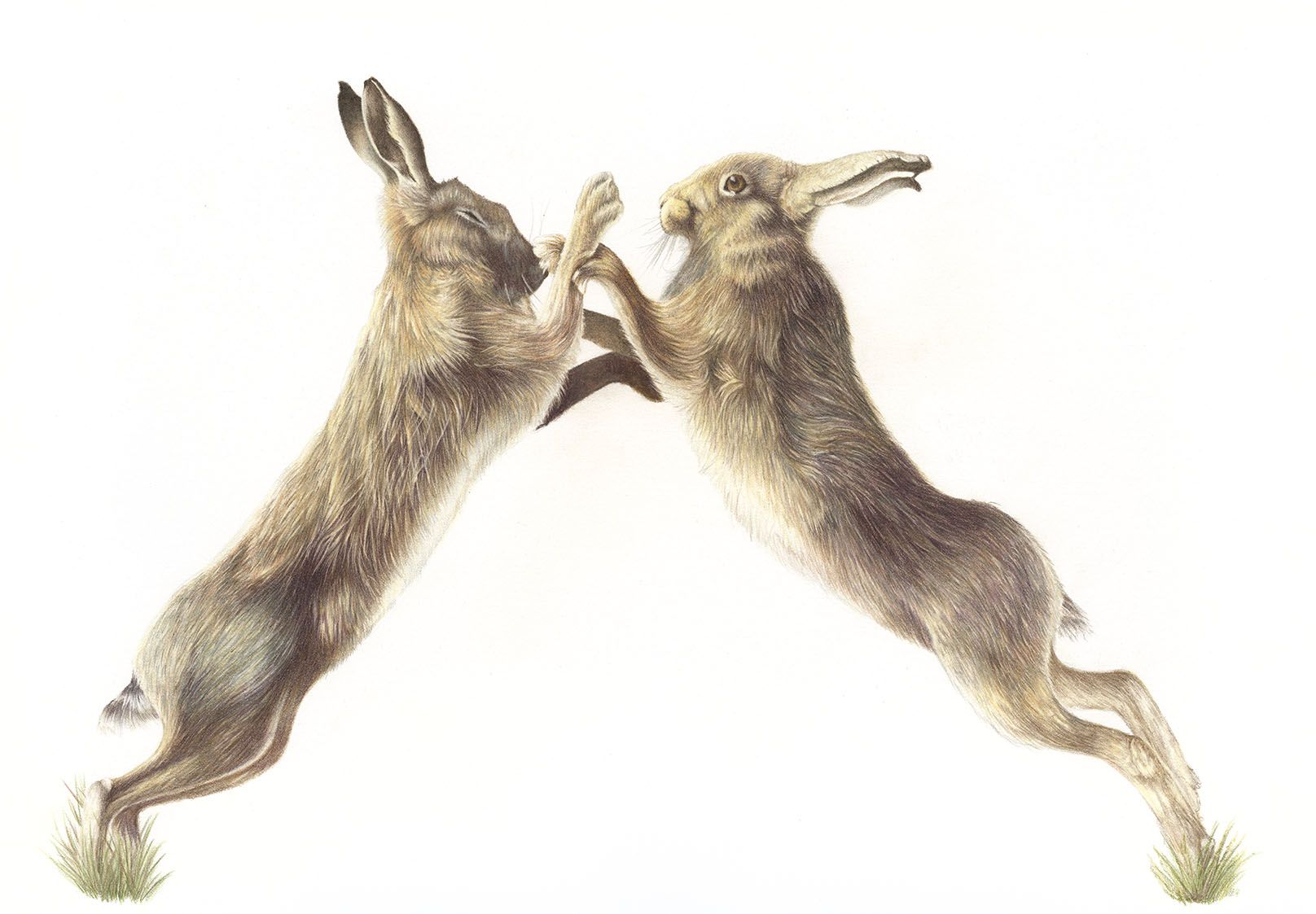 British Wildlife Art For Sale Boxing Hares