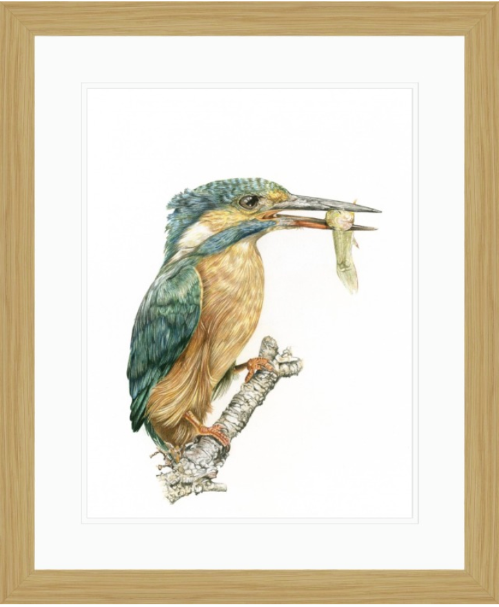 'Kingfisher' - Framed