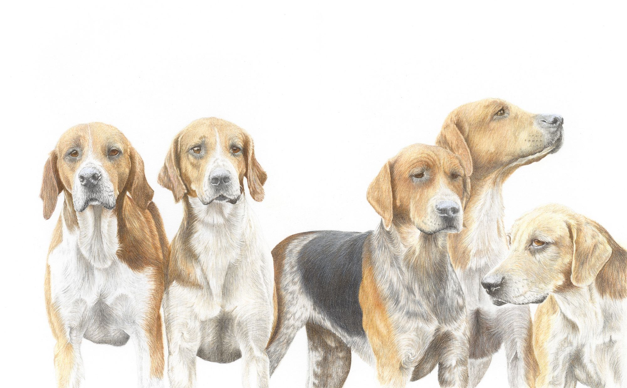 Foxhound Art