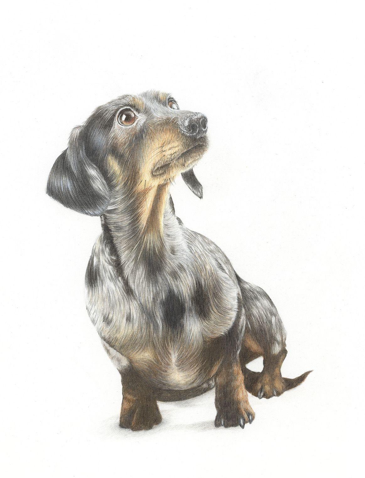 Dachshund Pet Portrait Specialist