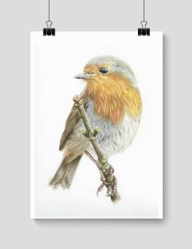 Robin - Print
