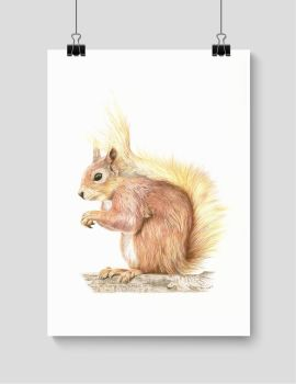 Red Squirrel - Print