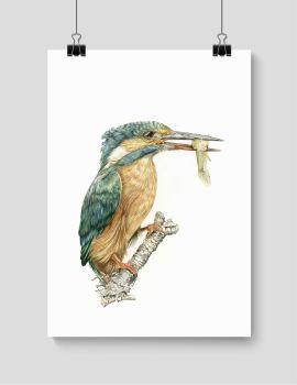 Kingfisher - Print