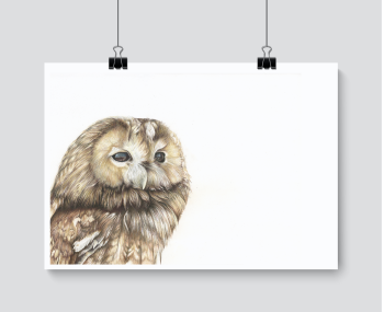 Tawny Owl - Charity Print