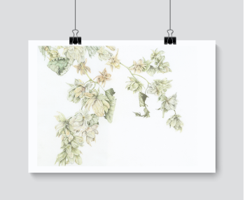 Hop Study - Print