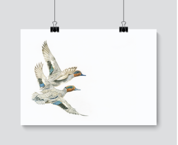 Fly Past - Print