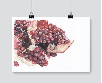 Pomegranate Study - Print