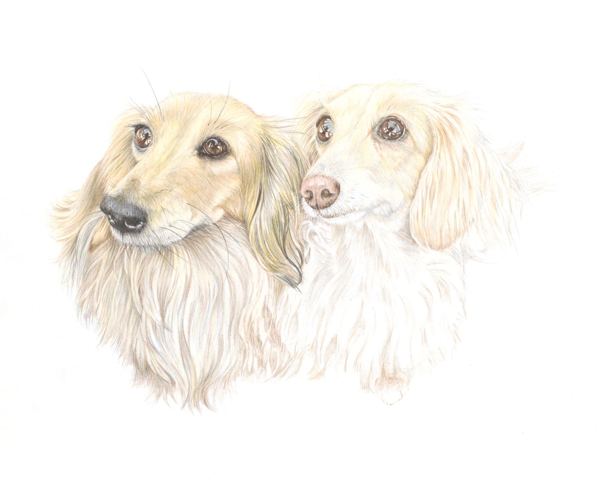 Pet portraits dachshund specialist