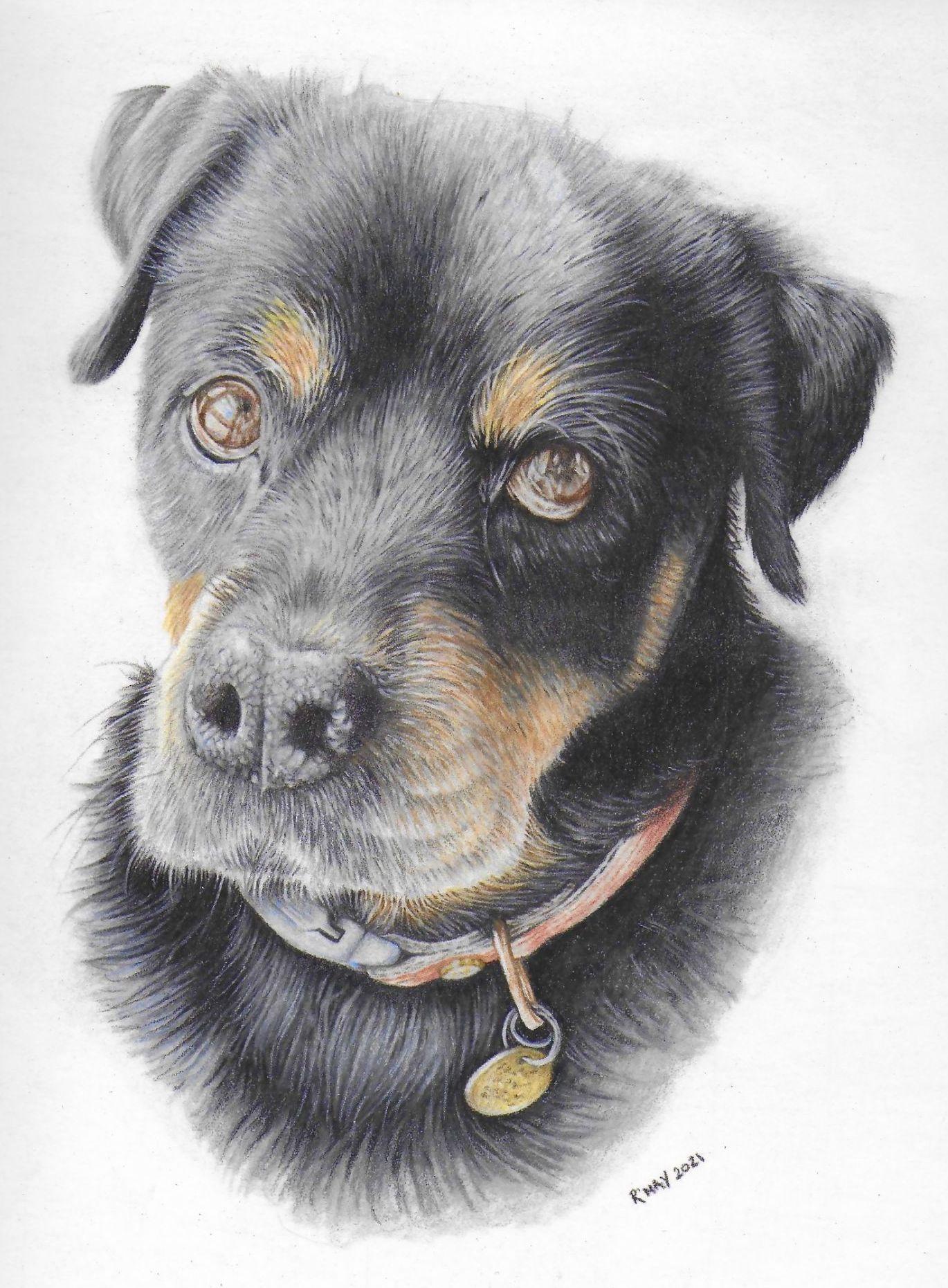 Rottweiler Pet Portrait