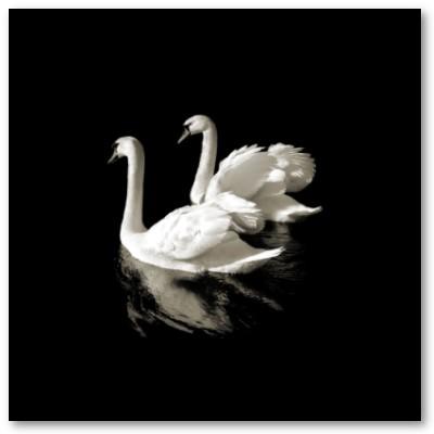 Swan Lake mp3