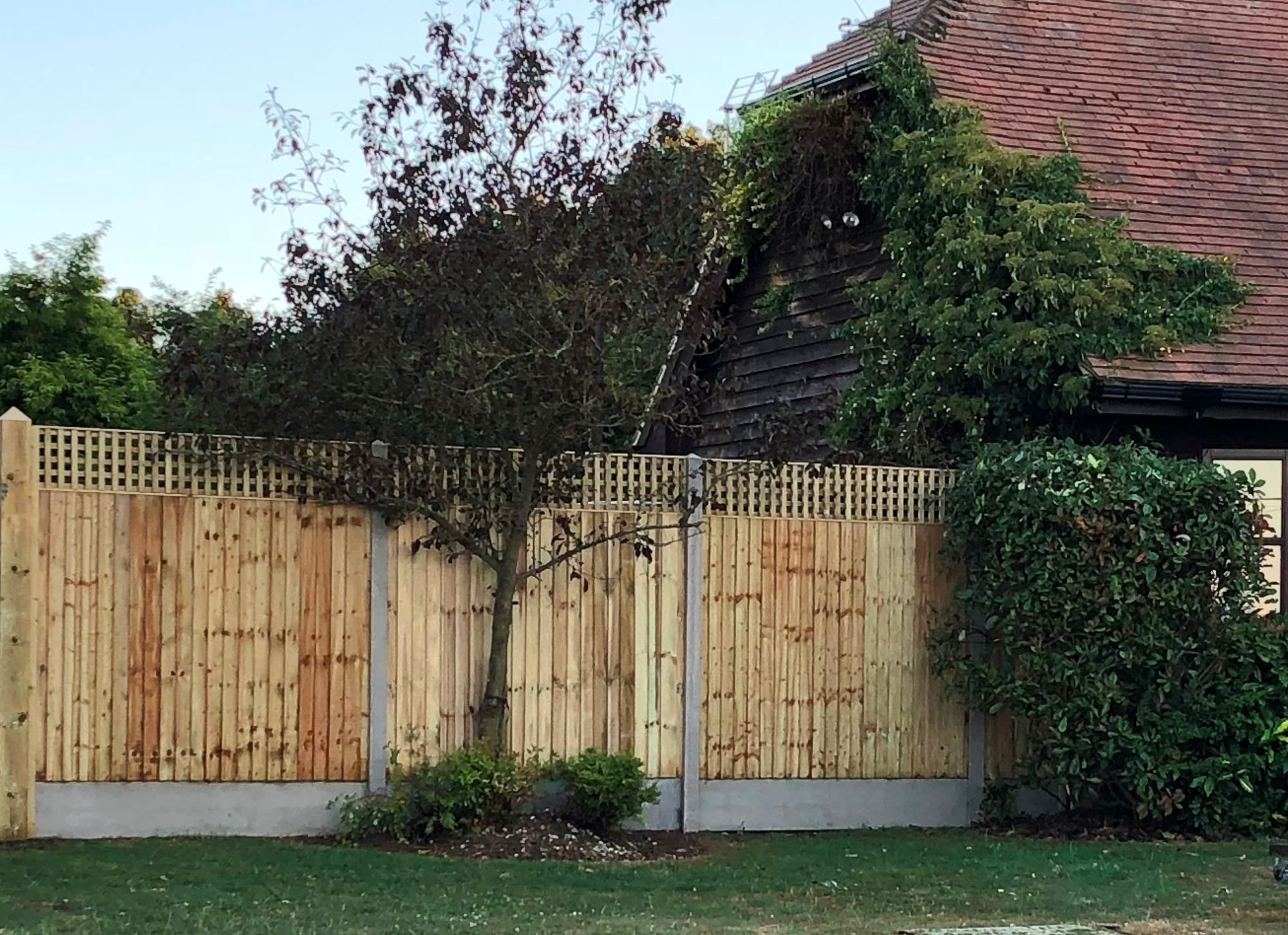 Closeboard fence with trellis top (2)