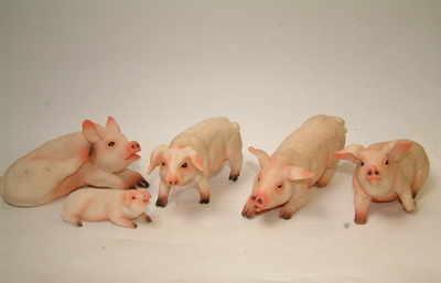 AM6052 Pigs