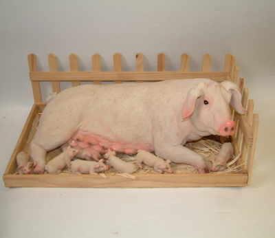 Sow & piglets in sty