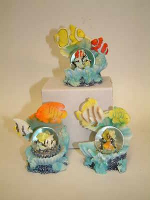 Fish & shell waterball