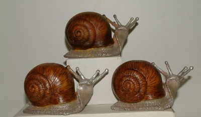 AM8414 garden snail 5
