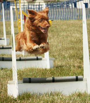 Pepper flyball