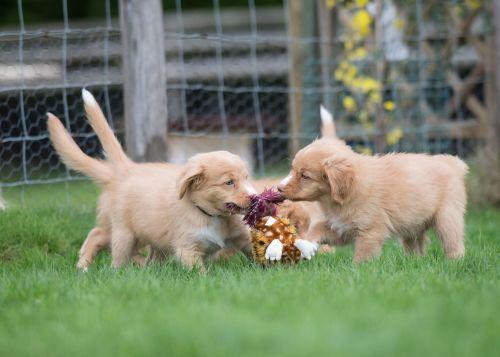 Tollah Pups9