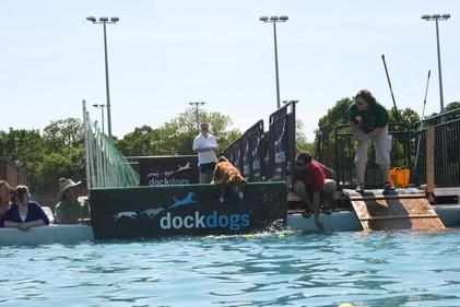 Storm dock dogs