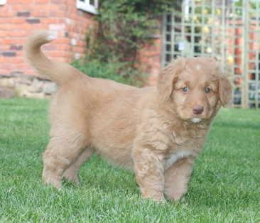 2011 June 2 - Rufus (12)