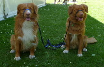 Ryley and Rufus - Bath 2012 (2)