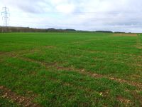Winter Wheat Varieties