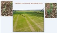 The Effects of Cover Crop Timing Termination