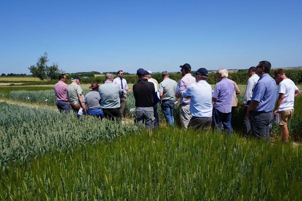 Growers visit Hutchinsons Little Ponton trials site