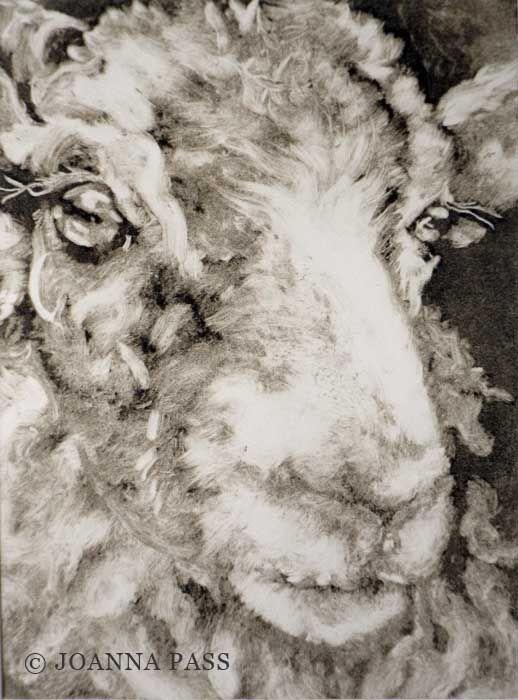 Ewe monoprint