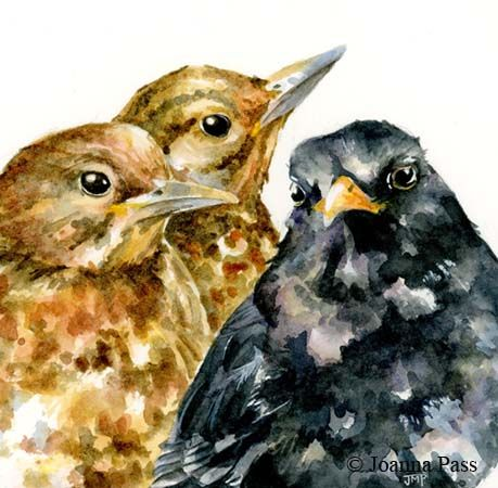 blackbird with young