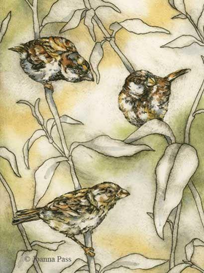 Sparrows drypoint intaglio
