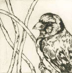 Goldfinch drypoint